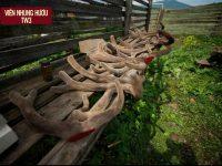 Điểm danh 10 địa chỉ bán nhung hươu uy tín nhất Việt Nam