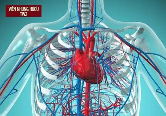 Nhung hươu có tác dụng thúc đẩy lưu thông máu ở tim mạch và các động mạch vành